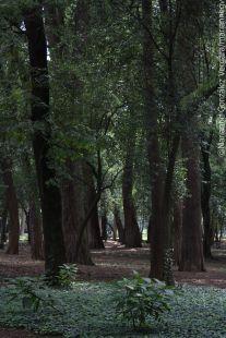Chapultepec forest. Mexico City
