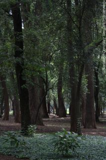 Chapultepec forest. Mexico City