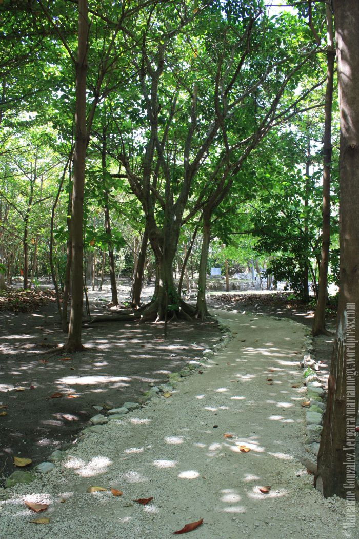 """El Rey"" Archeological Site. Quintana Roo-Mexico"