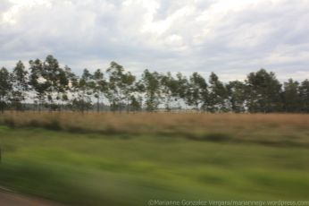 A view of paraguayan fields from a moving car