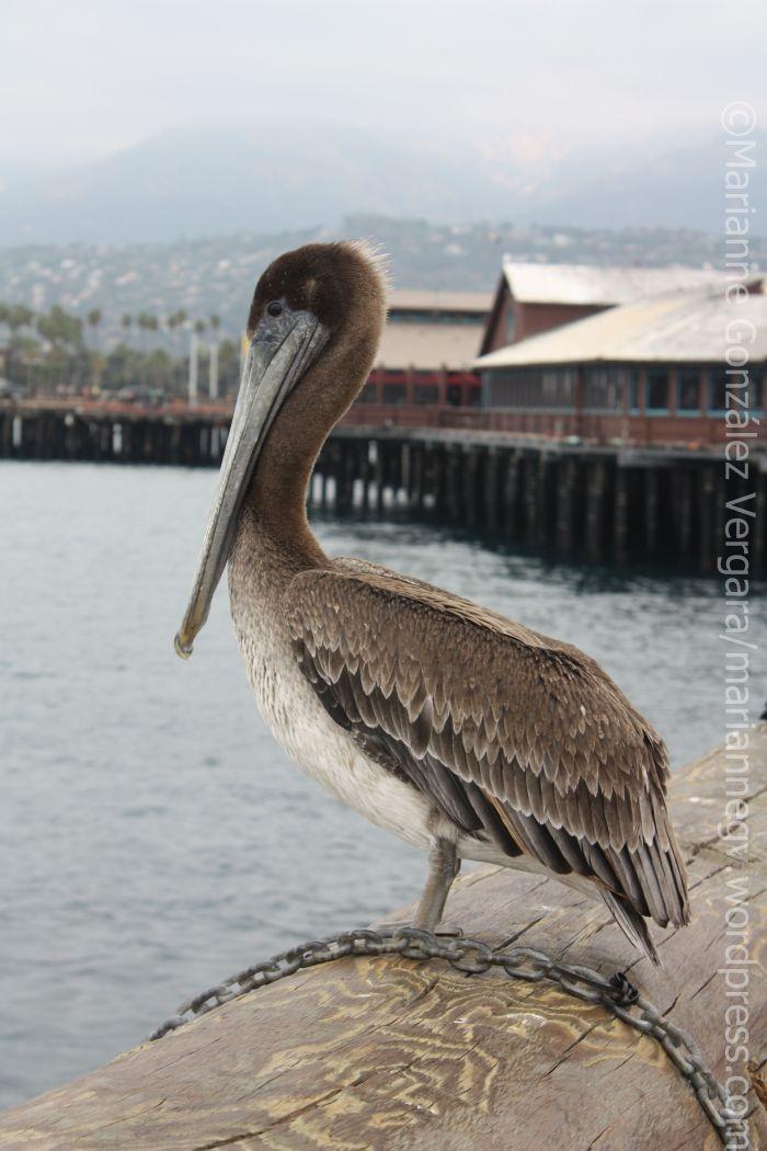 Santa Barbara Harbor, California