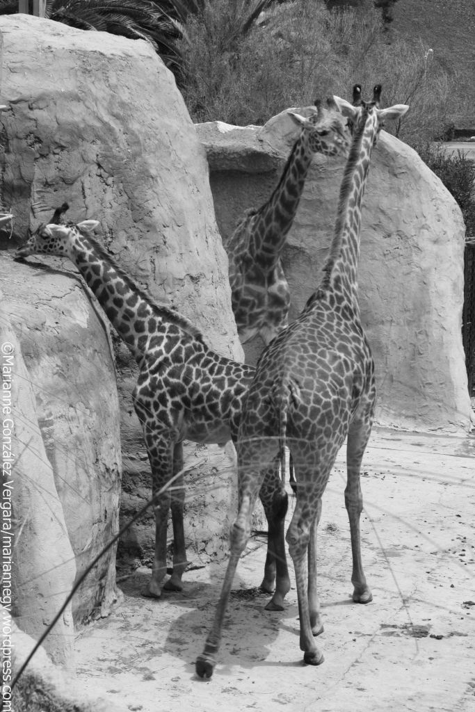 Santa Barbara Zoo, California