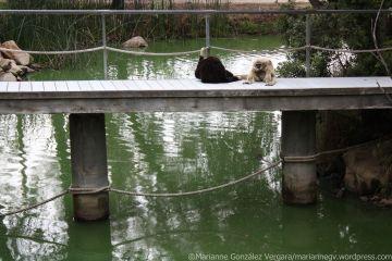 Santa Barbara Zoo. California.